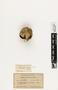 63573 Protopolybia aedula Nest a IN