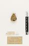 63614 Protopolybia aedula Nest b IN