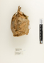 63838 Protopolybia acutiscutis Nest a IN