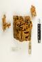 63846 Camponotus Nest IN