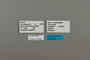 124025 Boloria bellona labels IN