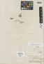 Salvia axillaris Moc. & Sessé ex Benth., MEXICO, M. Sessé [MA 188], Isotype, F