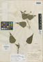 Salvia cyanea Benth., MEXICO, M. Sessé 203, Isotype, F