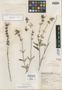 Salvia cyanicephala Epling, Mexico, G. B. Hinton 12792, Isotype, F