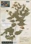 Salvia durantiflora Epling, MEXICO, Y. Mexia 8944, Isotype, F