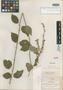 Salvia igualensis Fernald, Mexico, C. G. Pringle 8418, Isotype, F
