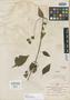 Salvia mocinoi Benth., MEXICO, M. Sessé 226, Isotype, F
