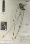 Salvia scaposa Epling, Mexico, G. B. Hinton 5332, Isotype, F