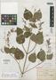 Salvia simulans Fernald, Mexico, C. G. Pringle 8927, Isotype, F