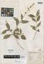 Salvia tricuspis Epling, MEXICO, G. B. Hinton 11260, Isotype, F