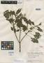 Salvia anguicoma Epling, VENEZUELA, J. A. Steyermark 55830, Isotype, F
