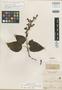 Salvia derasa Benth., COLOMBIA, K. T. Hartweg 1327, Isotype, F