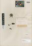 Salvia glandulifera Cav., Ecuador, L. Née s.n., Isotype, F