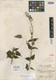 Salvia guaranitica A. St.-Hil. ex Benth., BRAZIL, A. F. C. P. de Saint-Hilaire 2756, Isotype, F