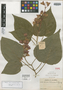 Salvia libanensis Rusby, COLOMBIA, Herb. H. Smith 1380, Isotype, F