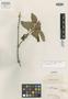 Salvia sordida Benth., COLOMBIA, K. T. Hartweg 1324, Isotype, F