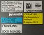 FMNHINS105083 Eurhopalothrix mabuya PT L