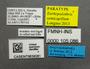 FMNHINS105086 Eurhopalothrix semicapillum L