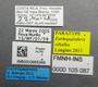 FMNHINS105087 Eurhopalothrix xibalba L