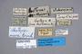 127062 Lesteva nova ST labels IN