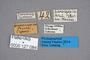 127084 Lesteva transcaspica ST labels IN