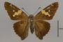 124042 Epargyreus clarus d IN