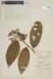 Miconia prasina (Sw.) DC., COLOMBIA, F