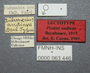 63446 Piestus andinus LT labels IN