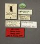 63453 Piestus rectus ST labels IN