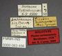 63456 Piestus surinamensis HT labels IN