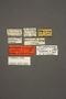 63464 Thinodromus capensis LT labels IN