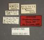 63461 Piestus Zirophorus planatus ST labels IN