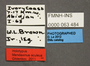 63484 Mendaxinus oculeus HT labels IN