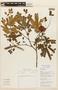 Abarema jupunba (Willd.) Britton & Killip, COLOMBIA, F