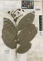 Couratari rufescens Cambess., BRAZIL, A. F. C. P. de Saint-Hilaire 111, Isotype, F