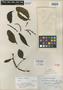 Phoradendron demerarae Trel., BRITISH GUIANA [Guyana], G. S. Jenman 2546, Isotype, F