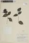 Mouriri myrtifolia Spruce ex Triana, VENEZUELA, F