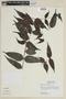 Mouriri myrtifolia Spruce ex Triana, PERU, F