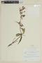 Pachyloma huberioides Triana, VENEZUELA, F