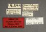 63459 Oxytelus bicornis NT labels IN