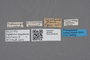 2818944 Acylophorus usambarae HT labels IN