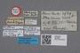 2818953 Oxytelus akazawensis HT labels IN
