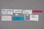 2818942 Thoracophorus filum ST labels IN