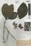 Medinilla aurantiflora Elmer, PHILIPPINES, A. D. E. Elmer 9934, Isotype, F