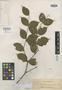 Medinilla bulusanensis Elmer, PHILIPPINES, A. D. E. Elmer 17386, Isotype, F