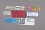2818954 Aleuonota vitalei LT labels IN