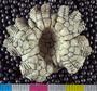 Women's Board Field Dreams program 2013 Echinoderm digitization Project