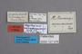 127076 Megalopinus nevermennianus HT labels IN