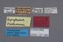 127083 Gyrophaena tsushimana HT labels IN