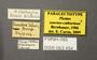 63454_Piestus sanctaecatherinae PLT labels IN
